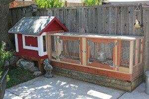 chicken coop fencing to prevent predators